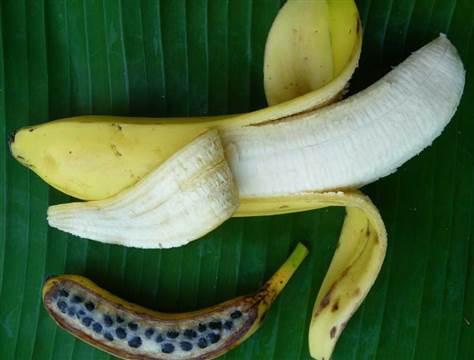 120711-BananaPhoto-hmed-1040a_files.grid-6x2.jpg